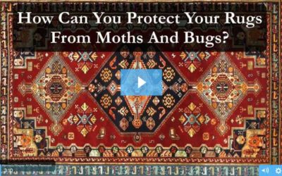Protect Your Rugs From Moths and Bugs